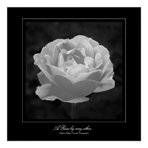 A Rose by any other..., Fine Art gallery-style Poster