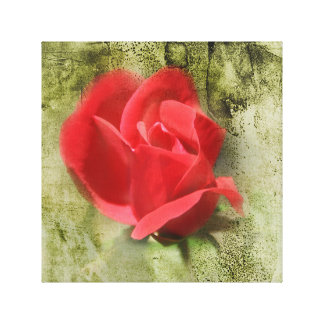 A Rose by any other name Canvas Print