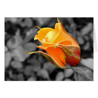 A Rose By Any Other Name Card