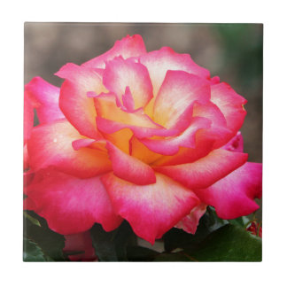 A Rose By Any Other Name Ceramic Tile