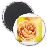 A rose by any other name is still a rose.JPG Magnets