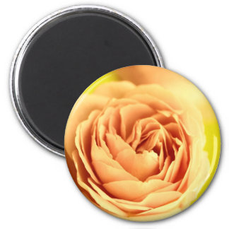 A rose by any other name is still a rose.JPG Magnet