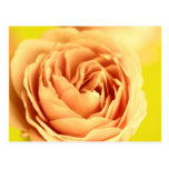 A rose by any other name is still a rose.JPG Post Cards