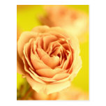 A rose by any other name is still a rose.JPG Post Card