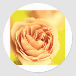 A rose by any other name is still a rose.JPG Round Sticker
