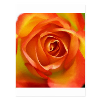 A Rose by any other name Postcard