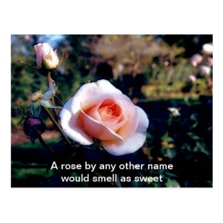A Rose by Any Other Name Rose Photograph Postcard