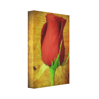 A Rose by any Other Name... Stretched Canvas Print