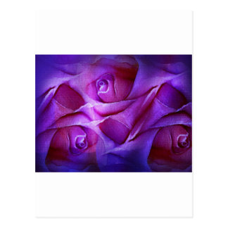 A Rose folded in layers Postcard