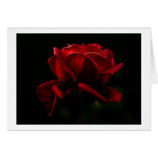A Rose for You Card