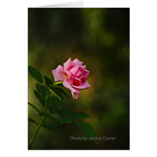 A Rose For You! Stationery Note Card