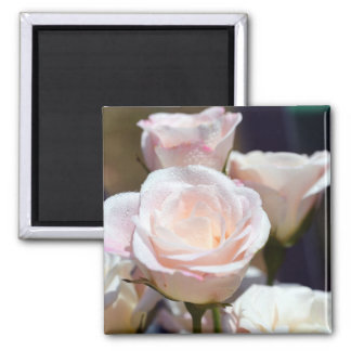 A Rose for You Refrigerator Magnets