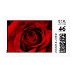A Rose in Bloom Stamps
