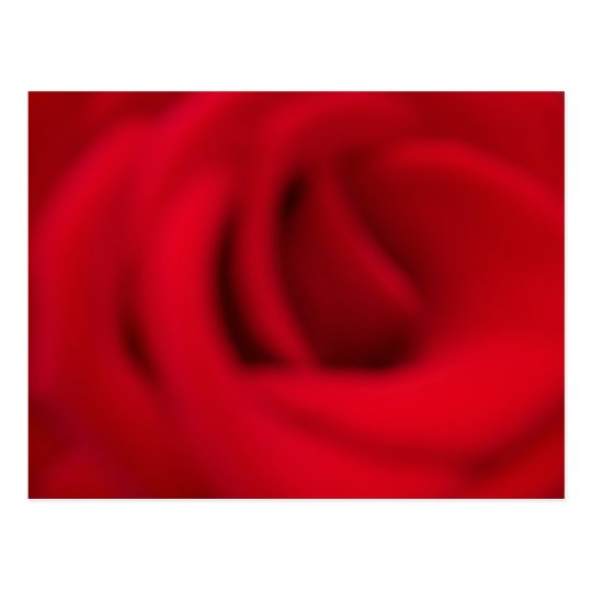 A Rose is a Rose is a Rose Postcard