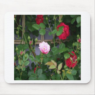 A Rose Is A Rose Mouse Pad