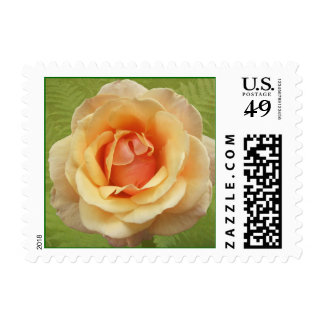 A Rose Is a Rose Postage