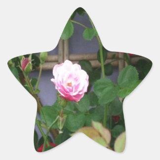 A Rose Is A Rose Star Sticker