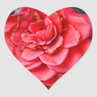 A Rose is anything but.... Heart Sticker