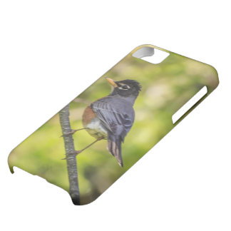 A Round Robin on a Branch Cover For iPhone 5C