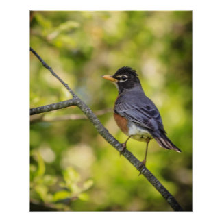 A Round Robin on a Branch Poster