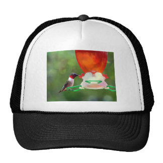 A Ruby Throated Hummingbird Trucker Hat