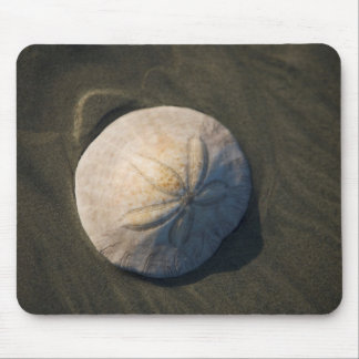 A Sand Dollar On The Beach Mouse Pad