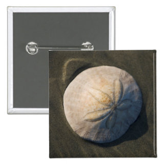 A Sand Dollar On The Beach Pinback Button