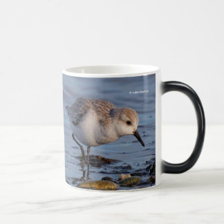 A Sanderling Forages on the Shore Magic Mug