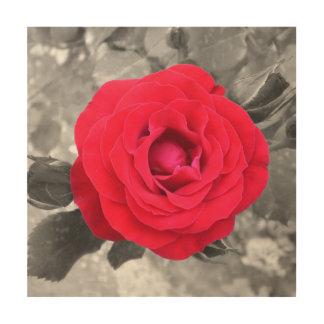 A saves rose in Tivoli Wood Wall Art