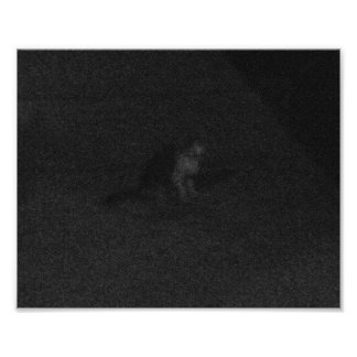 A Scared, Lonely Cat on Tahquitz Canyon Boulevard Poster