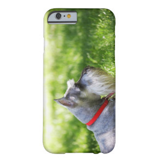A Schnauzer laying in the grass Barely There iPhone 6 Case