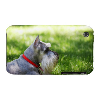A Schnauzer laying in the grass iPhone 3 Covers