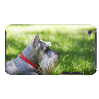 A Schnauzer laying in the grass iPod Touch Case
