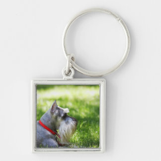 A Schnauzer laying in the grass Keychain