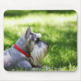 A Schnauzer laying in the grass Mousepads