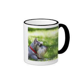 A Schnauzer laying in the grass Coffee Mugs