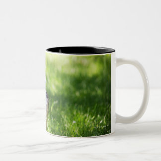 A Schnauzer laying in the grass Two-Tone Coffee Mug