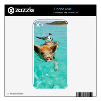 A sea gull and a pig skin for iPhone 4S