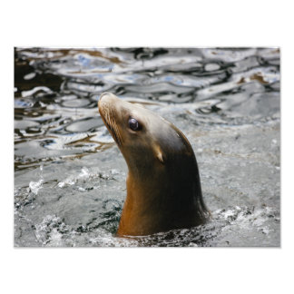 A Sea Lion Animal Swimming In Water, Photography Photo