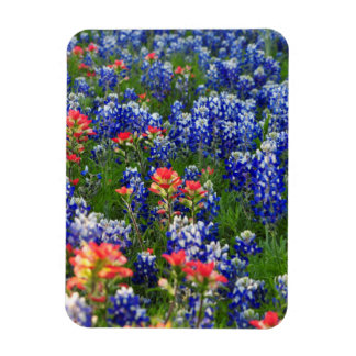 A Sea of Bluebonnets and Indian Paintbrushes Magnet