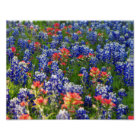 A Sea of Bluebonnets and Indian Paintbrushes Poster