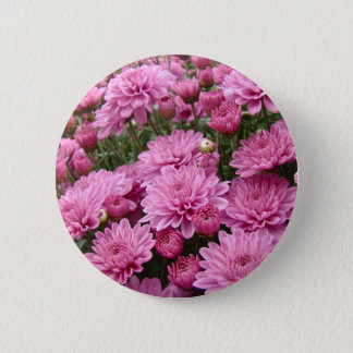 A Sea of Pink Chrysanthemums #2 Button