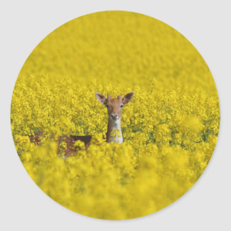 A sea of yellow classic round sticker
