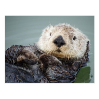 A sea otter chilling out in the water postcard