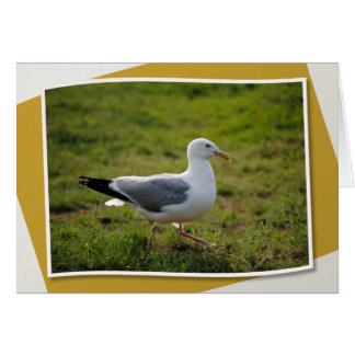 A Seagull Struts Card