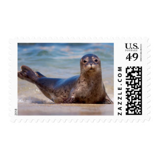 A seal on a beach along the Pacific Coast Postage
