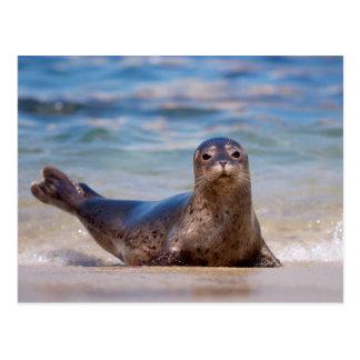 A seal on a beach along the Pacific Coast Postcard