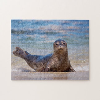 A seal on a beach along the Pacific Coast Puzzle