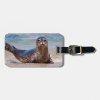 A seal on a beach along the Pacific Coast Tag For Luggage