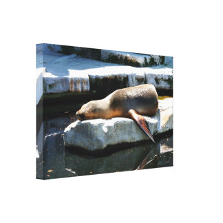 A Seal Sleeping on a platform Canvas Print